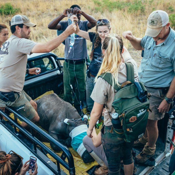 Saving Rhinos in South Africa