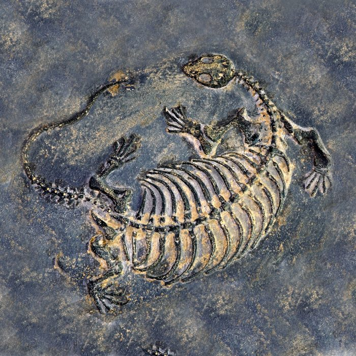 Finding Fossils in Liaoning